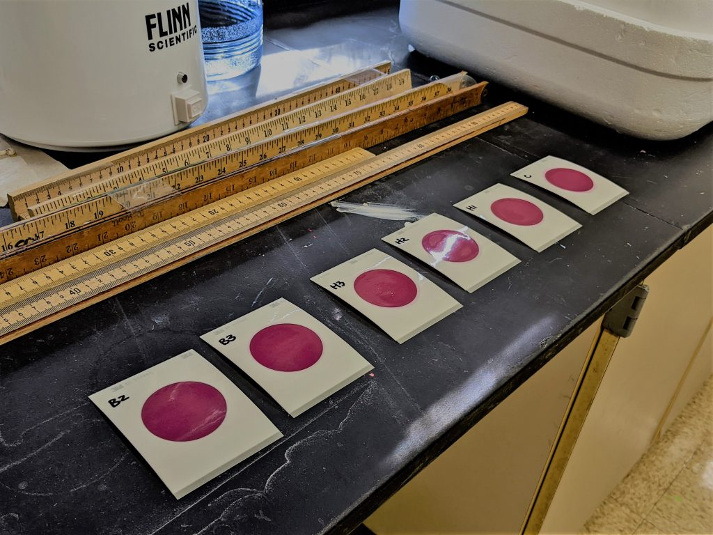 Multiple Petri dishes are shown